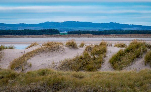 Budle Bay, sand dunes, Northumberland,