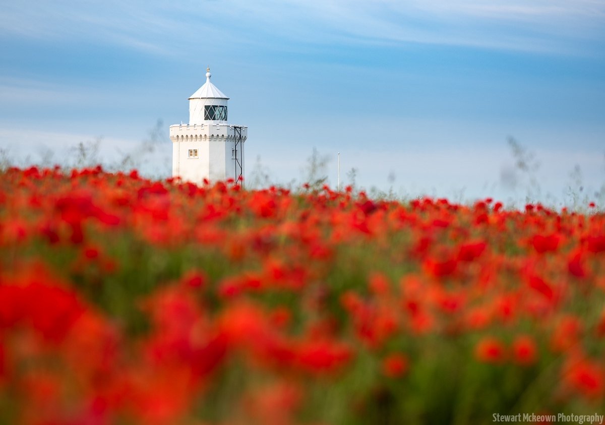 Poppies at South Foreland